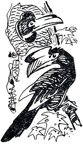 Птицы живущие в норах