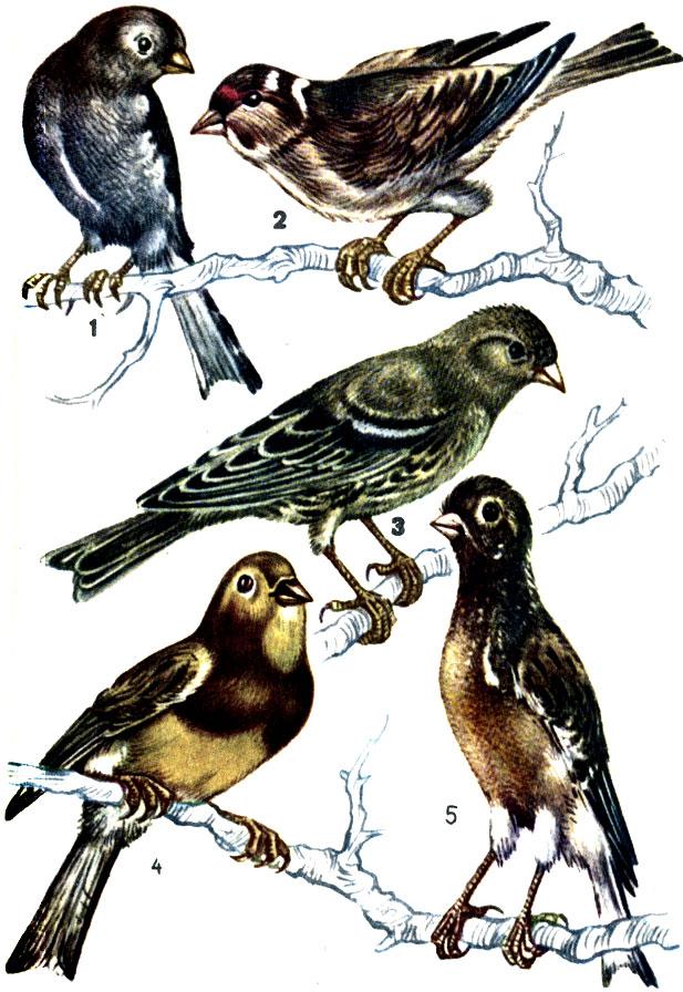 Как выходить однокрылую птицу